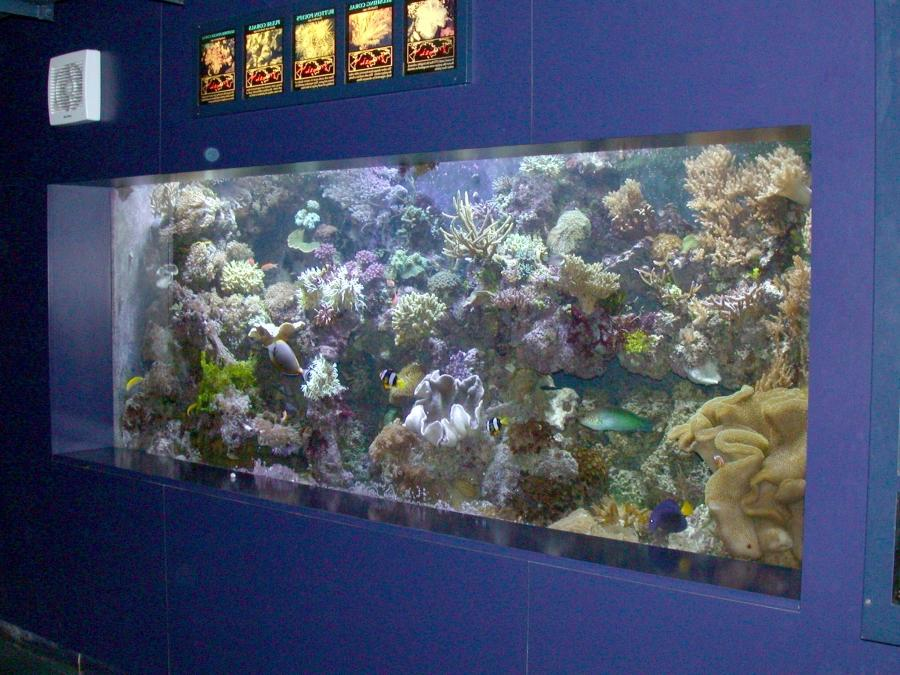 Marine reef aquarium at the London aquarium