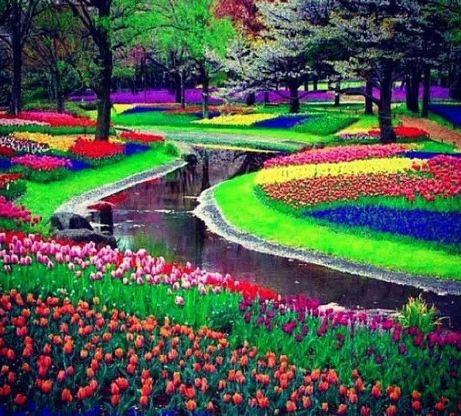 Tulip Amsterdam Keukenhof: Keukenhof Gardens And Tulip Fields Photos