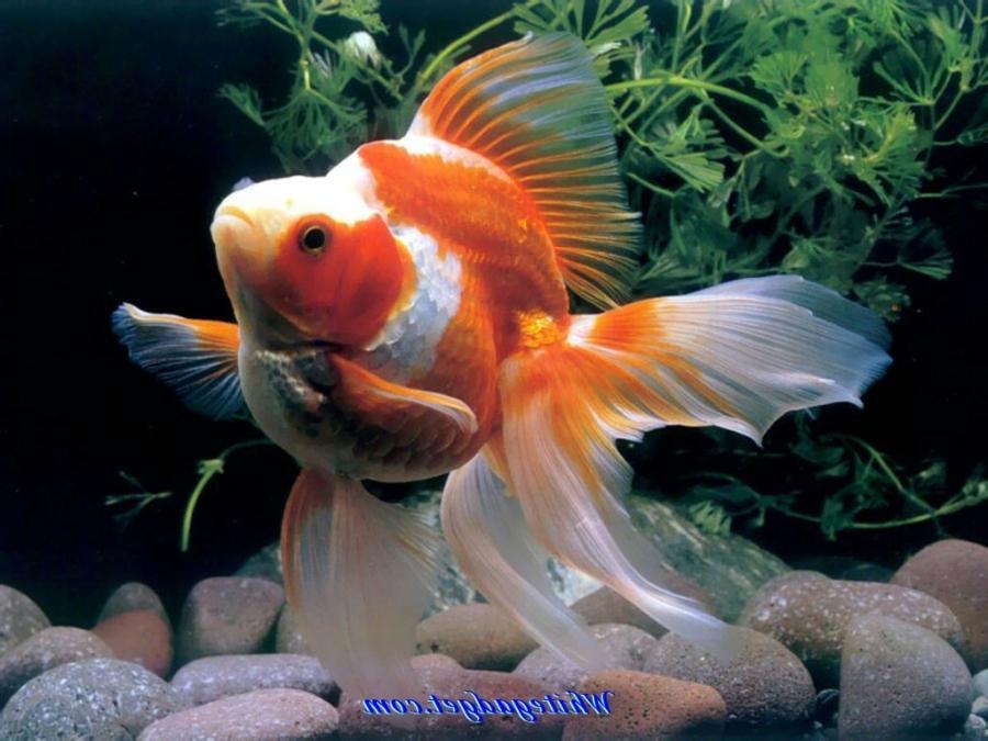 Aquarium Fish Photos And Names