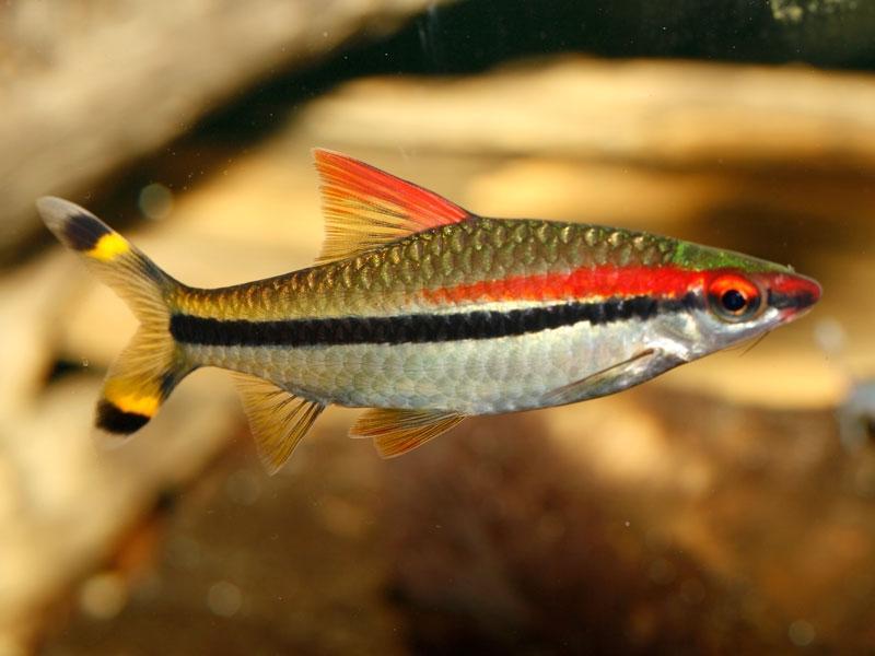 Common Aquarium Fish Photos