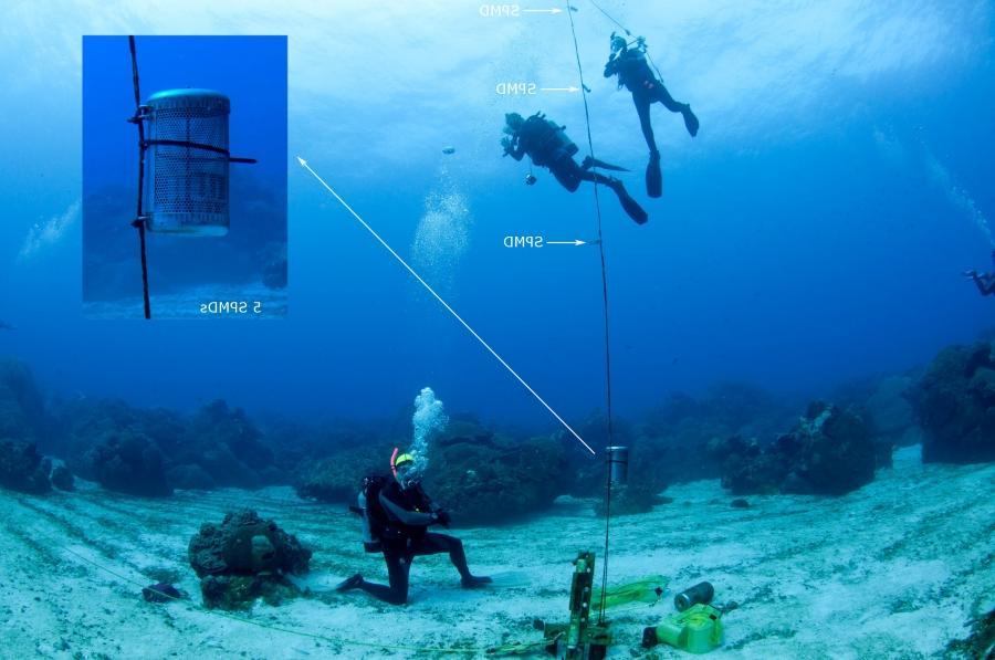 A buoy line attached to equipment on the sea floor, floats...