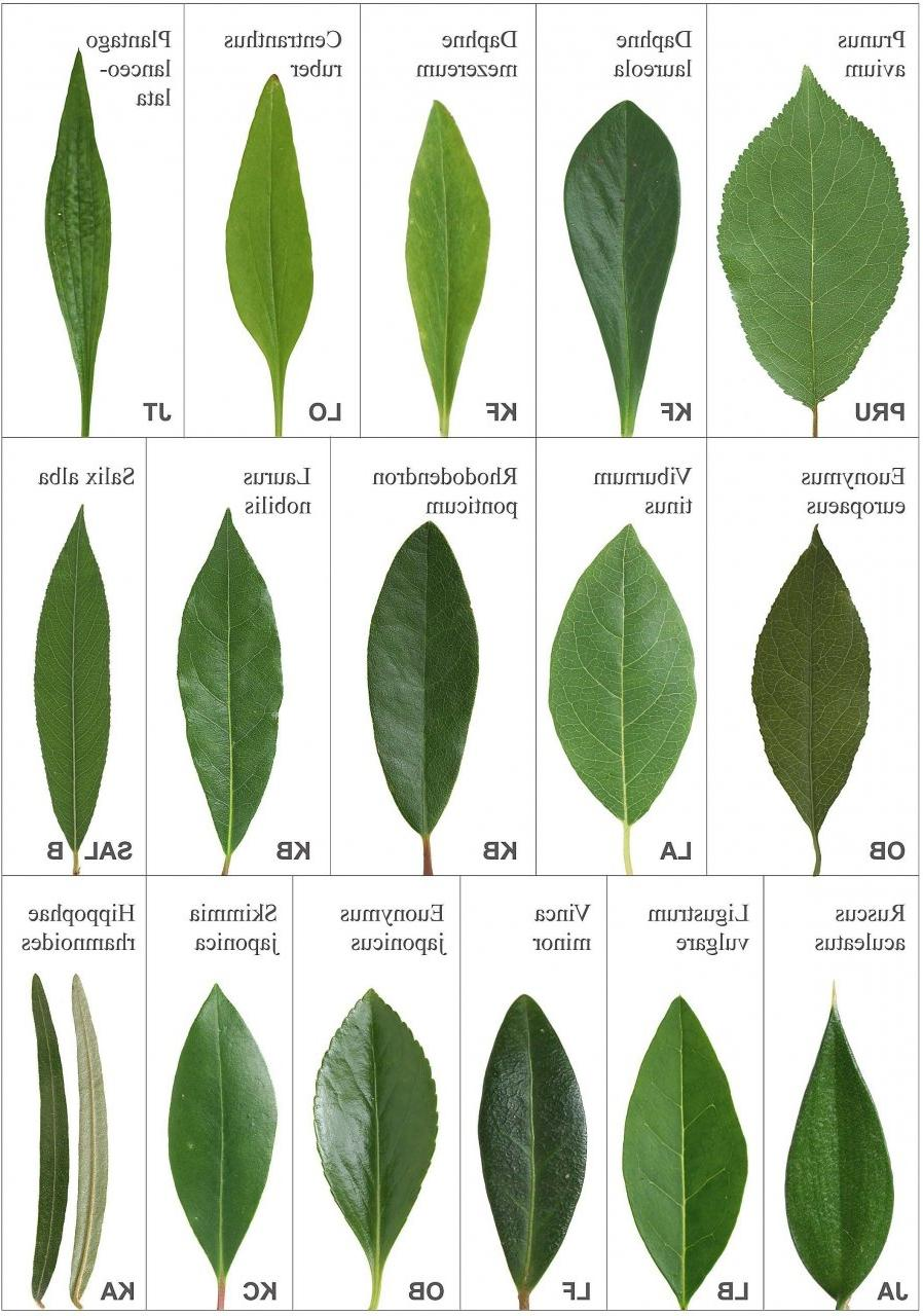 Vine identification guide bing images - House plant identification guide by picture ...