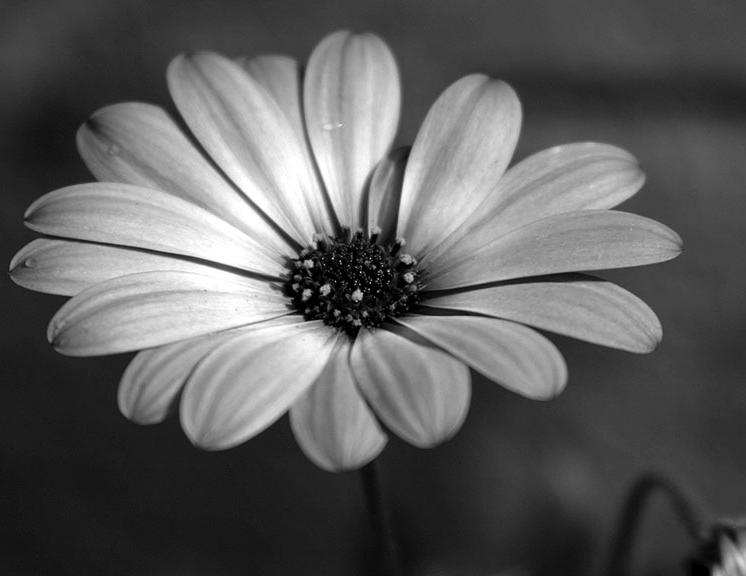 Black And White Flowers 25
