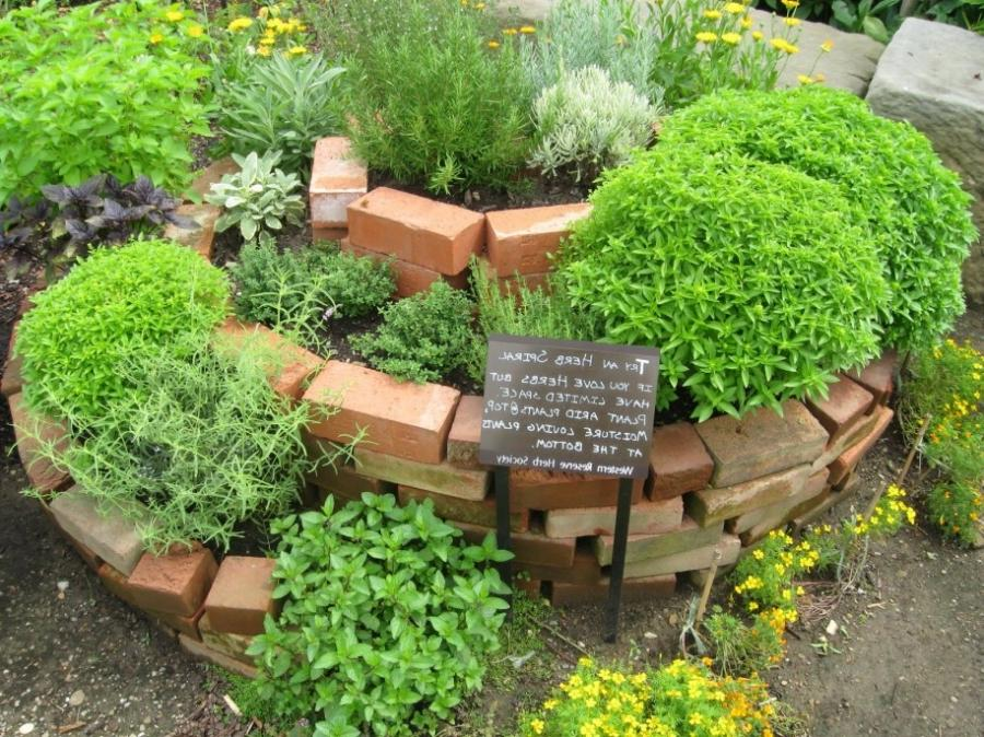 Herb garden design photos