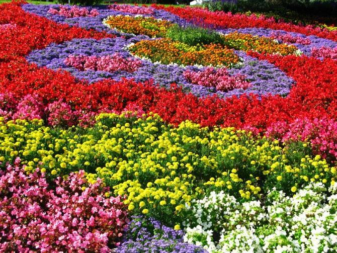 Photos annual flower gardens - Summer time gardening tips ...