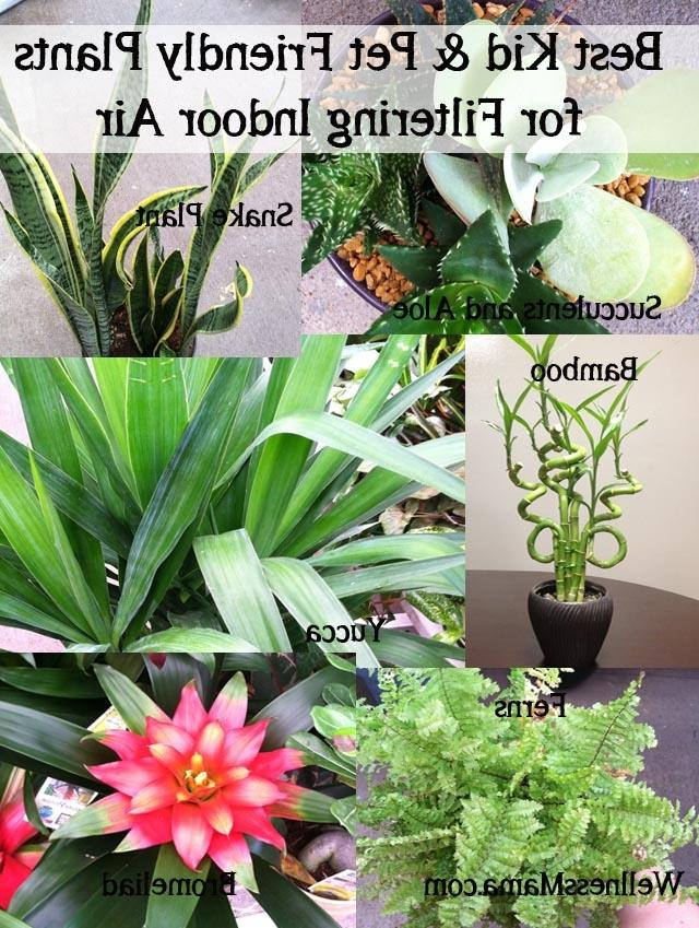 Poison house plants photos for Best plants to improve air quality
