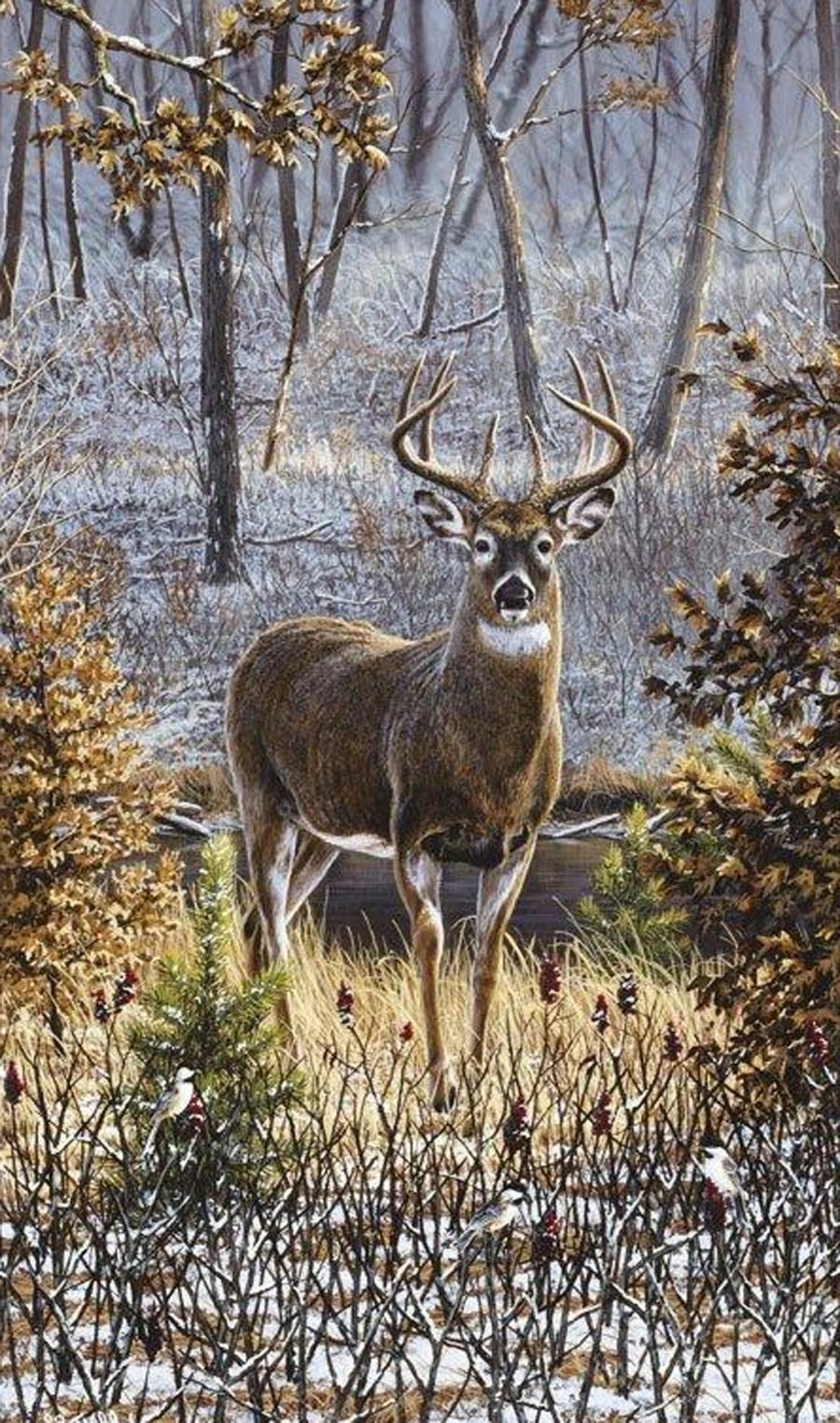 Whitetail deer photos wallpaper for Deer wallpaper mural