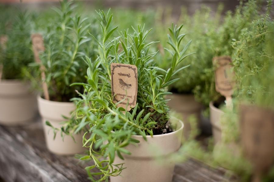 Top 20 Beautiful Herb Gardens Beautiful Herb Gardens For The Garden Pinterest A Beautiful Herb