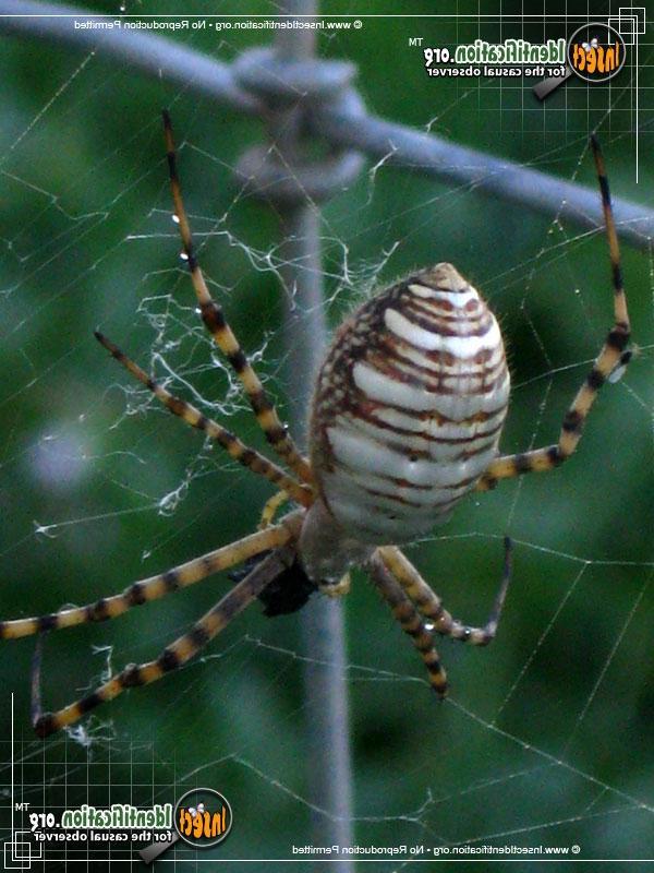 Poison Control Utah >> California garden spider photo