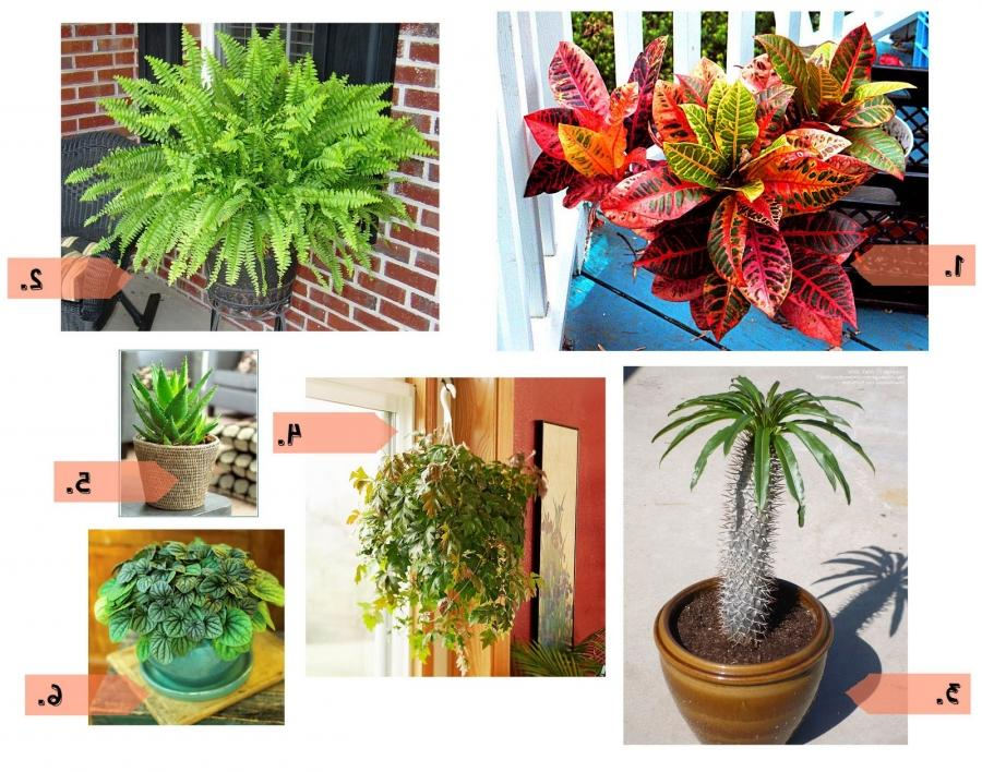 Photos of popular house plants - Most popular house plants ...
