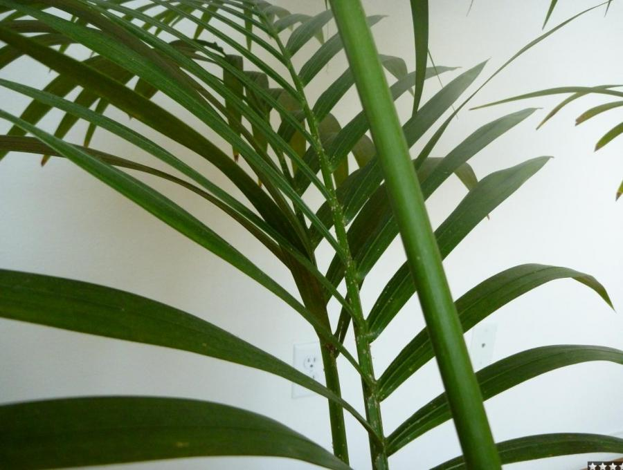 31dee5acf12bd7cced273866f24b61e8 Tropical House Plant Leaf Identification on tropical leaves, foliage plants identification, indoor plant identification, tropical trees, tropical plants florida identification, house plant identification,