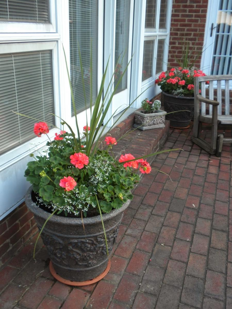 Annual flower container photos annual flower container ideas izmirmasajfo
