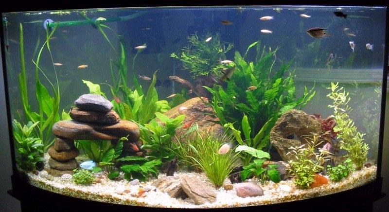 Aquarium photo tips for Aquarium decoration tips