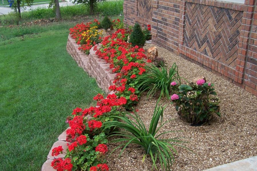 какие цветочки высадить на даче в весеннюю пору чтоб цвели все лето фото