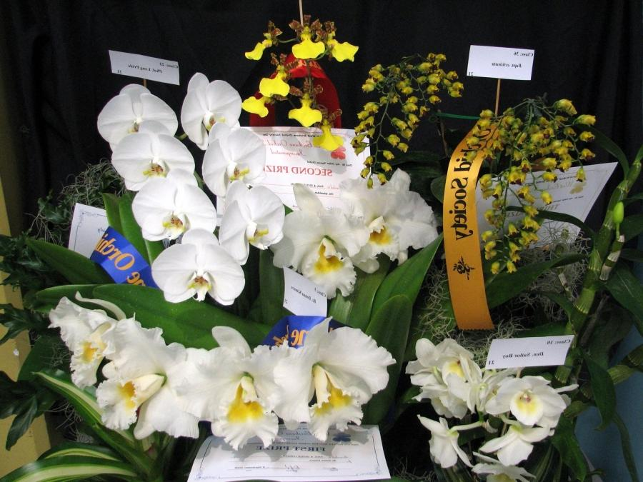 Prize Winning Photos Of Flowers