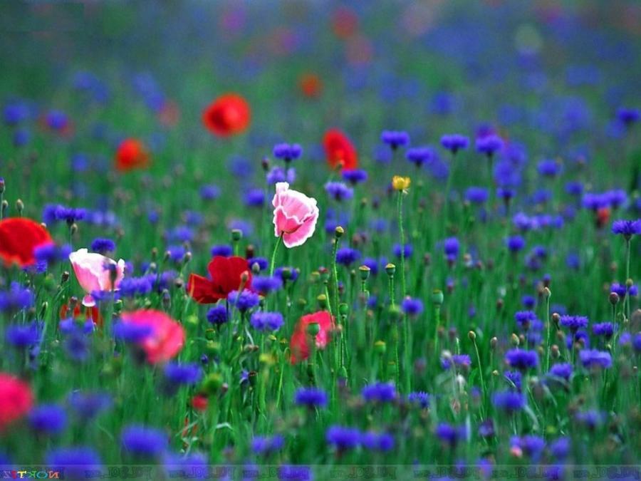Free Beautiful Flower Wallpaper Wallpaper Desktop Hd