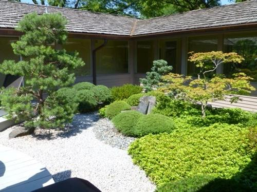 Japanese garden plants photos for Japanese style garden plants
