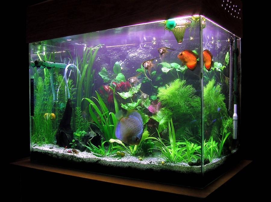 Fish Tank Competition : Aquariums All fresh water aquarium fish photos source