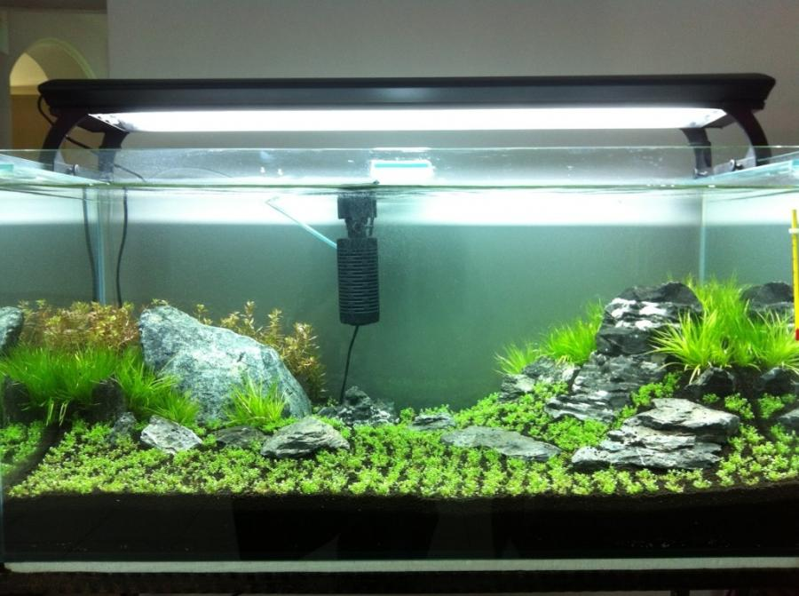 Photo of live aquarium plants