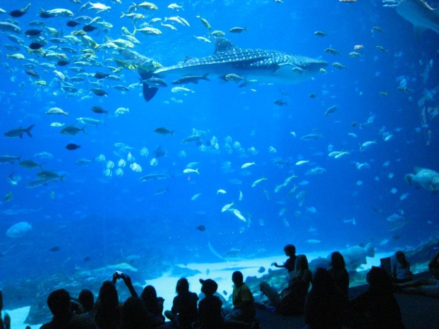 Atlanta Georgia Aquarium Photos