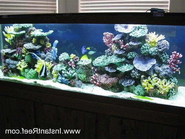 How to convert a Saltwater Fish Aquarium with live rock into an...