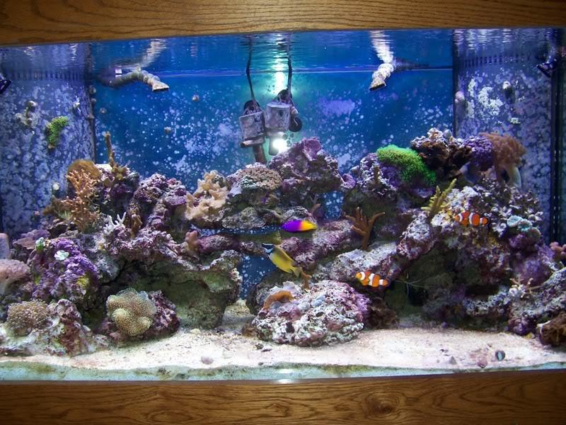 Marine fish tank maintenance 10g top 1 to 15 gallon for Saltwater fish for 10 gallon tank