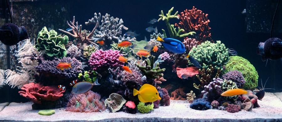 Reef aquarium photo contest