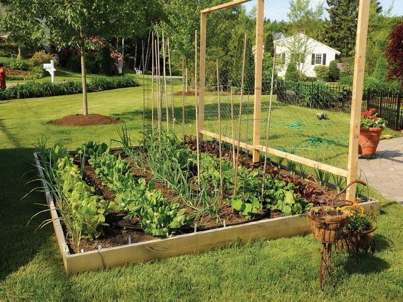 Backyard Vegetable Garden Photos
