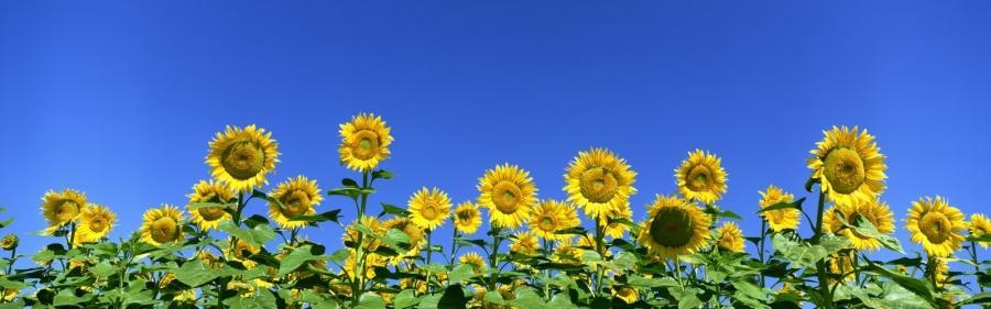 Panoramic Photos Of Flowers