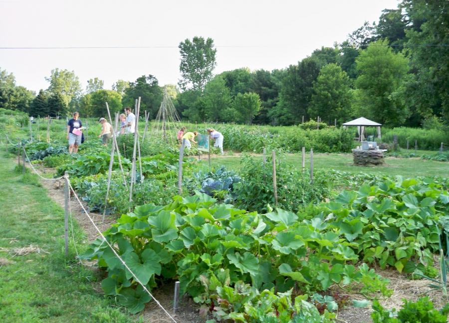 Photo garden burlington vt for The gardener burlington
