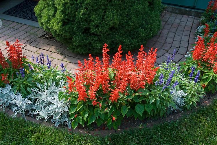 Annual flower garden photos for Annual flower garden designs