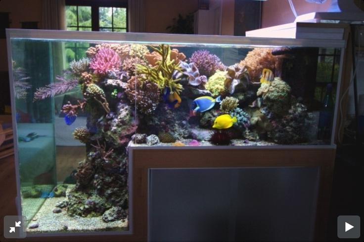 Step down reef aquarium saltwater fish tank