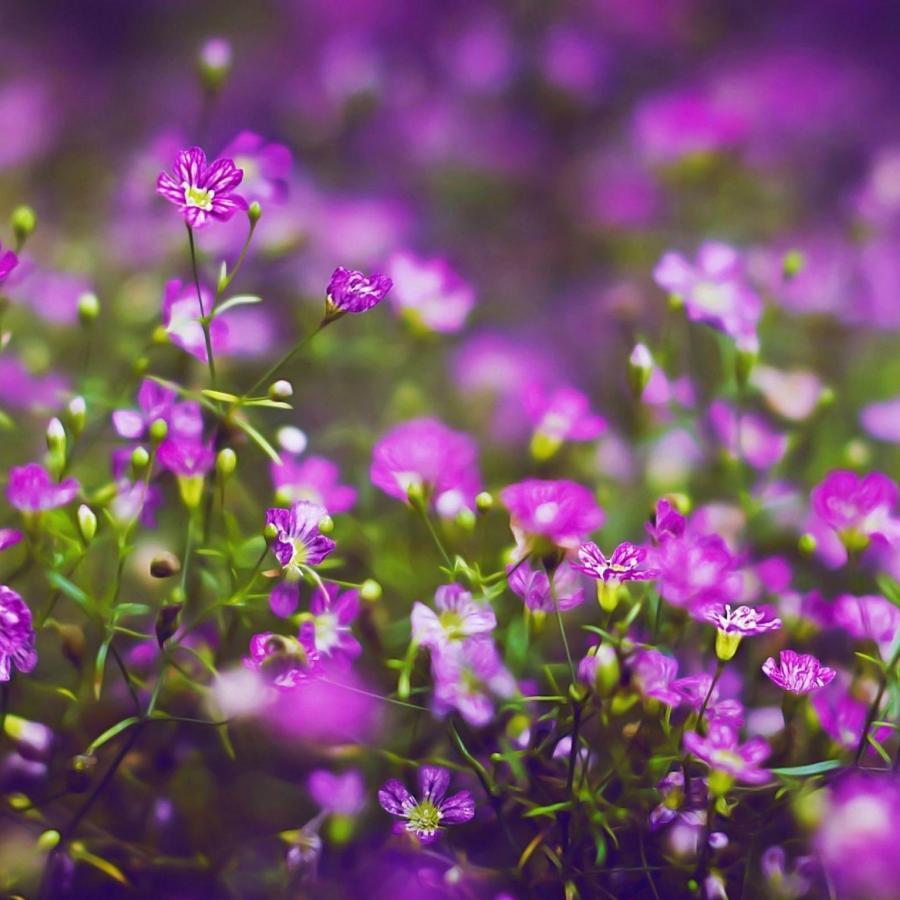 New Ipad Flower Photo