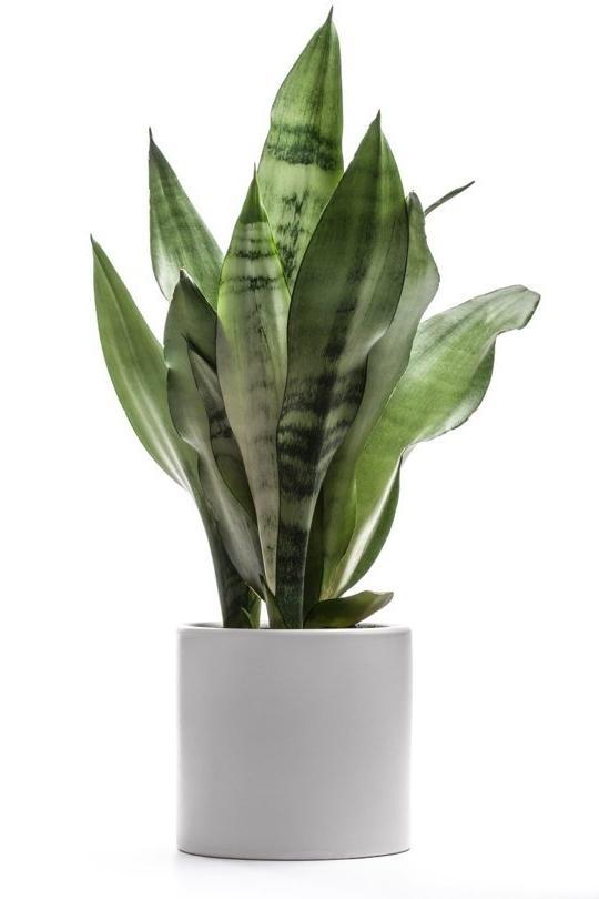 Hardy house plants photos - Hardy houseplants ...