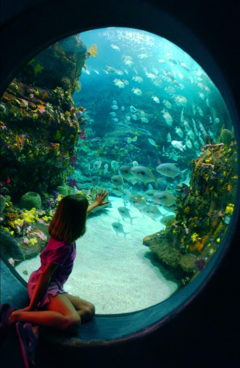 Nc Aquarium Photo Contest