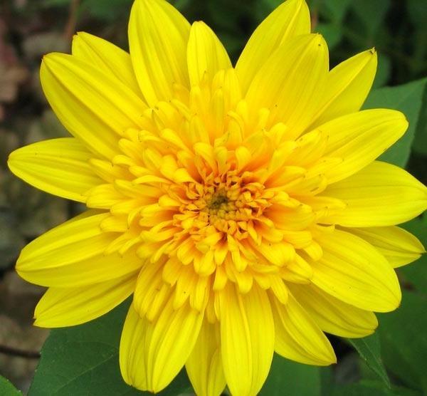 Perennial Flowers List Photos