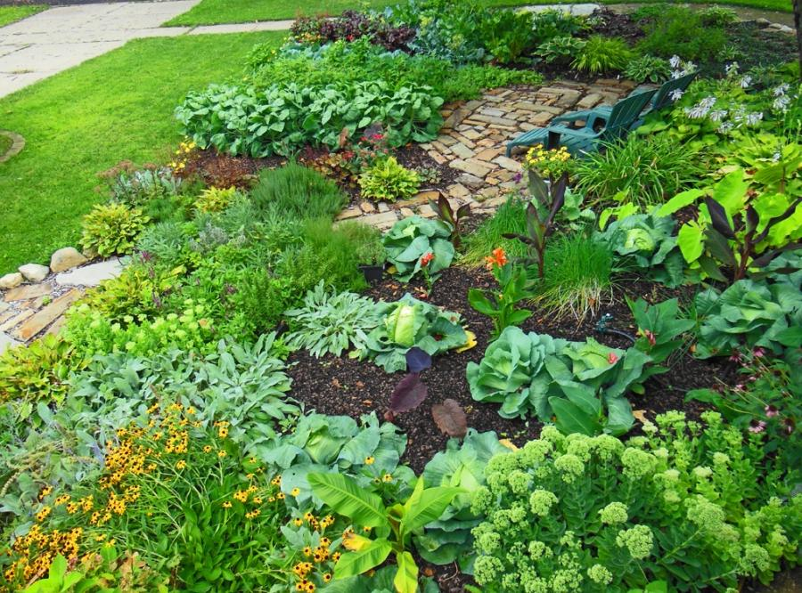 Front Yard Vegetable Garden Photos