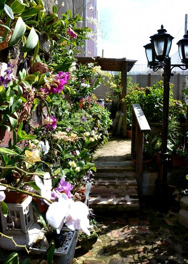 The open veranda of The Gallery Inn holds the wall of orchids...