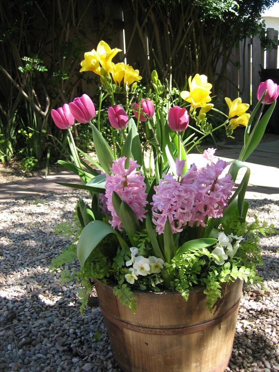 Photos of spring bulb gardens for Spring bulb garden designs