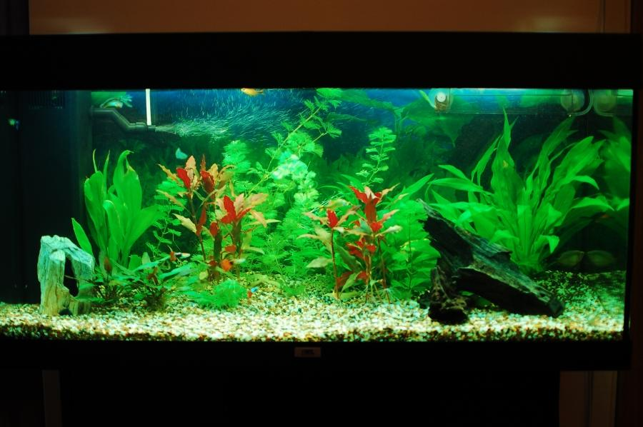 Aquariums photos Beautiful aquariums for home