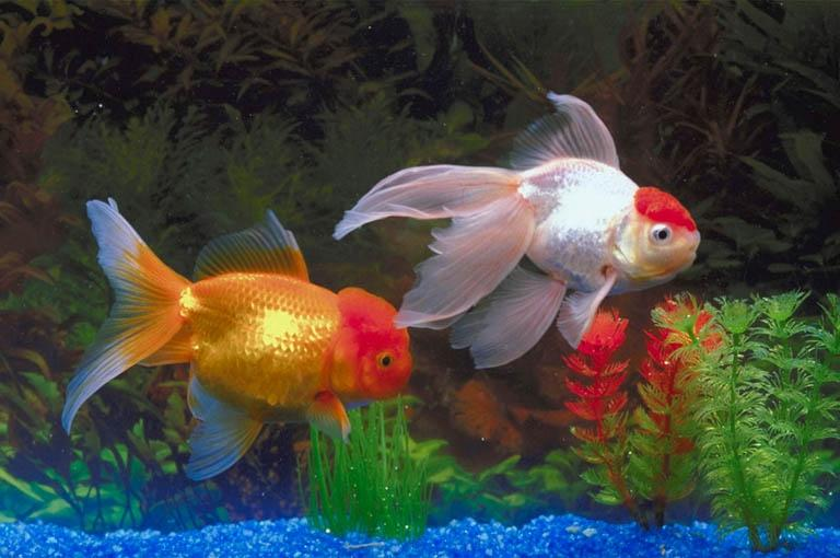 Freshwater aquarium fish species photos Types of fish aquarium