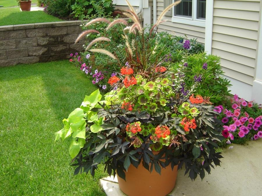Container gardening flowers photos - Better homes and gardens container gardening ...