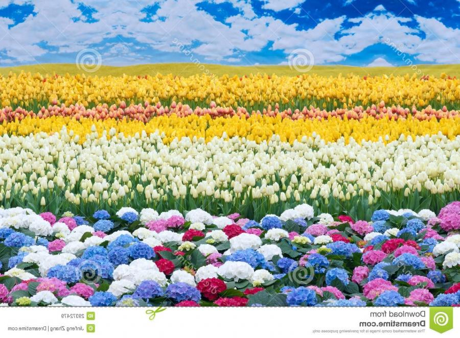 Flower scenery royalty free stock images image 29372479 - Scenery Flowers Photos
