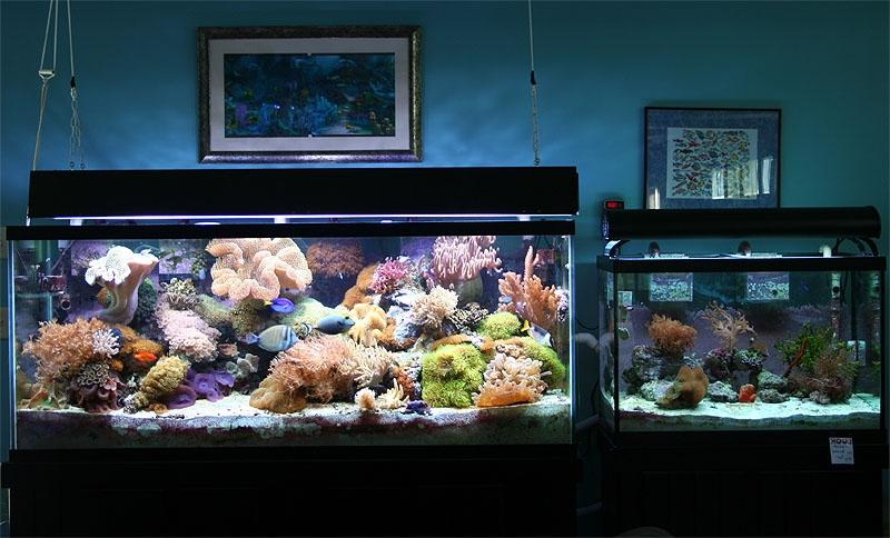 best saltwater aquarium tanks