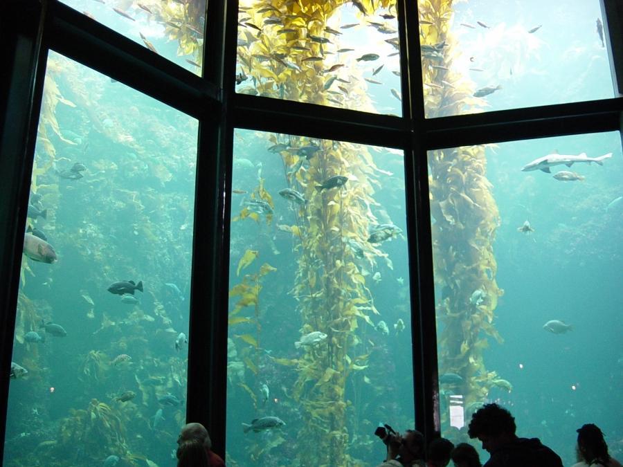 Aquariums Photo