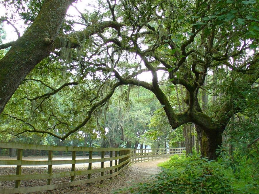 Brookgreen gardens photos for Brookgreen gardens south carolina