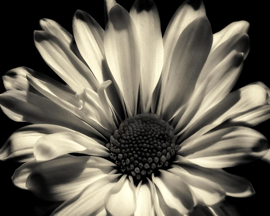 Quietly She Waits - Flower Art Work - Black and White Flower Art