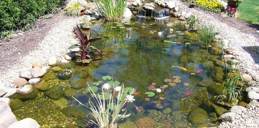 Photos water gardens for Water garden construction