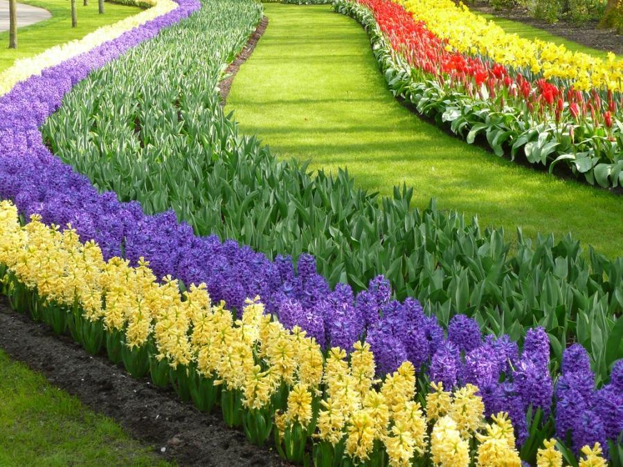 Фото всех низких многолетних цветов