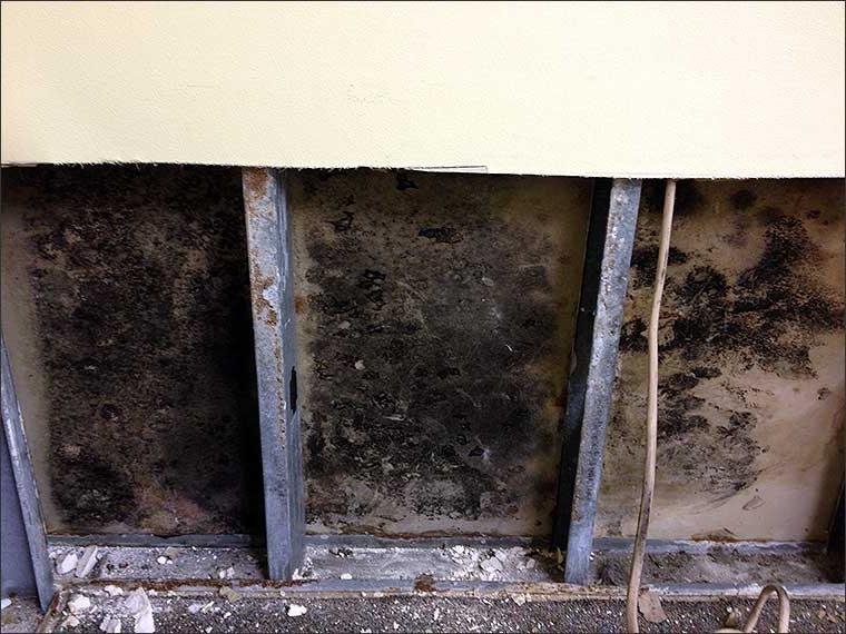 Black Mold Drywall Photos